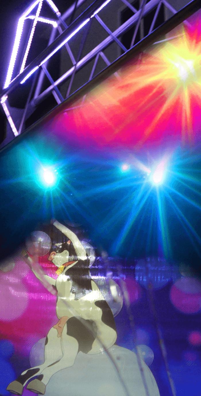 Happy Cow Car Wash Laser Show Car Wash - Car laser light show